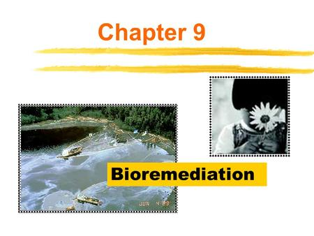 Bioremediation Chapter 9. Biotechnology and the Environment  Environment – describes everything that surrounds a particular organism Other organisms.