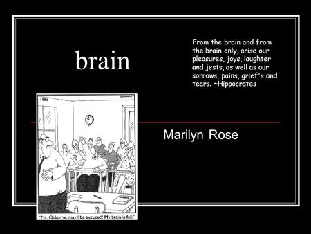 Brain Marilyn Rose From the brain and from the brain only, arise our pleasures, joys, laughter and jests, as well as our sorrows, pains, grief's and tears.