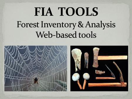  Interactive programs with a User Interface  Available 24-7, on the national FIA Web site  Easy access to the national FIA database Generate Reports.