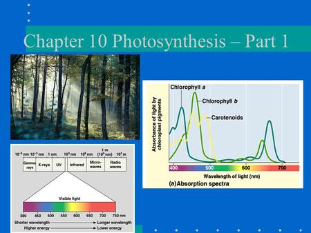 Chapter 10 Photosynthesis – Part 1. Plan before Thanksgiving Break Ch. 10 discussion Quiz on Ch. 9 - Wed., Oct. 28 Quiz on Ch. 10 - TBD Cellular Respiration.