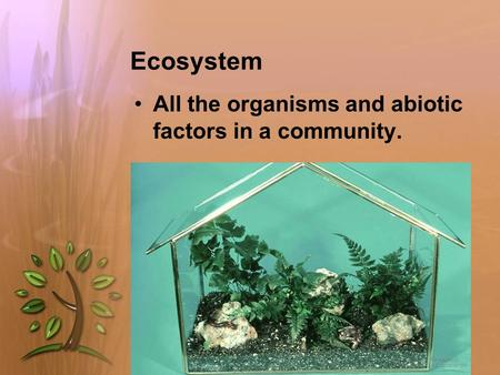 Ecosystem All the organisms and abiotic factors in a community.