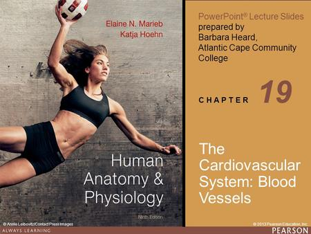 Human <strong>Anatomy</strong> & <strong>Physiology</strong> Ninth Edition PowerPoint ® Lecture Slides prepared by Barbara Heard, Atlantic Cape Community College C H A P T E R © 2013 Pearson.