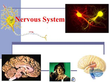 2007-2008 Nervous System. I.The Human Body A.Cells - Basic unit of structure and function. B.Tissues - Group of cells that perform a single function (e.g.