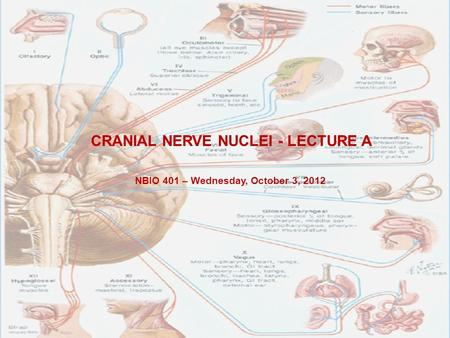 CRANIAL NERVE NUCLEI - LECTURE A NBIO 401 – Wednesday, October 3, 2012.