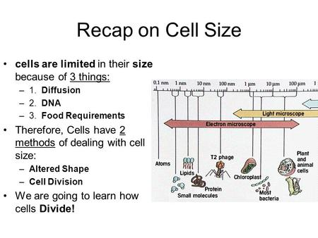 Recap on Cell Size cells are limited in their size because of 3 things: 1. Diffusion 2. DNA 3. Food Requirements Therefore, Cells have 2 methods of.