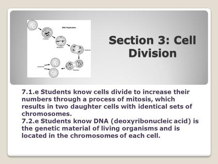 Section 3: Cell Division 7.1.e Students know cells divide to increase their numbers through a process of mitosis, which results in two daughter cells with.