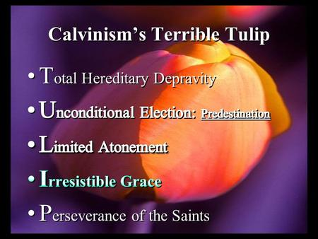 "Calvinism's Terrible Tulip. ""A man is not saved because he believes in Christ; he believes in Christ because he is saved"" ( L. Boettner; The Reformed."