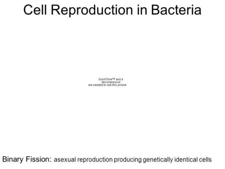 Cell Reproduction in Bacteria Binary Fission: asexual reproduction producing genetically identical cells.