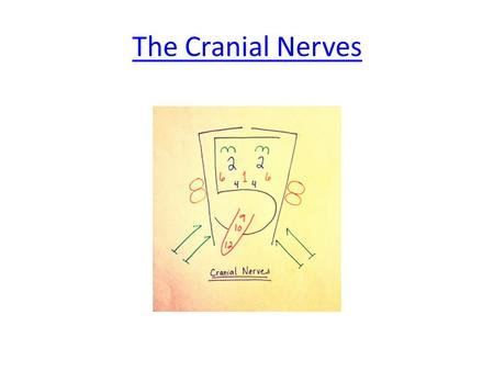 The Cranial Nerves. Cranial Nerves Cranial nerves are spinal nerves that come out of the brain instead of the spinal cord.
