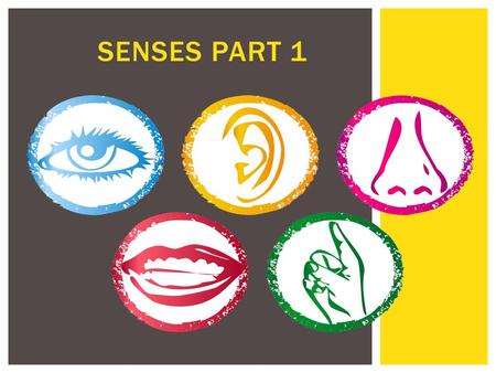 SENSES PART 1.  Types of General Senses:  Touch  Pain  Temperature  Vibration  Itch  Proprioception  Types of Special Senses:  Smell  Taste.