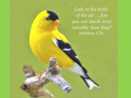Look at the birds of the air….Are you not much more valuable than they? Matthew 6:26.
