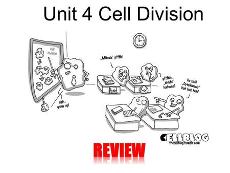 Unit 4 Cell Division REVIEW.