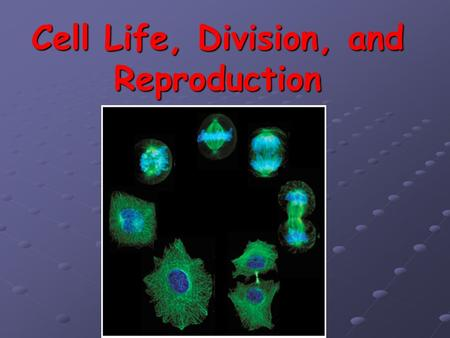 Cell Life, Division, and Reproduction. Specialized Cells Cells are specialized – have particular function/role Ex: nerve, blood, muscle, sperm, etc Ex: