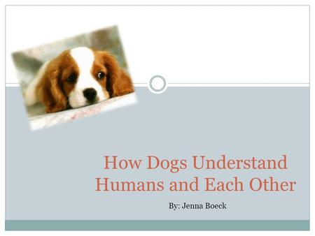 How Dogs Understand Humans and Each Other By: Jenna Boeck.
