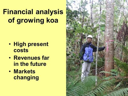 Financial analysis of growing koa High present costs Revenues far in the future Markets changing.