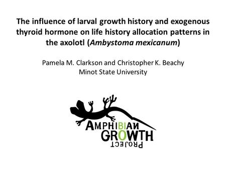The influence of larval growth history and exogenous thyroid hormone on life history allocation patterns in the axolotl (Ambystoma mexicanum) Pamela M.