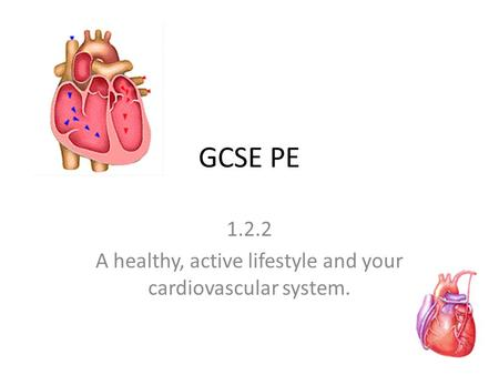GCSE PE 1.2.2 A healthy, active lifestyle and your cardiovascular system.