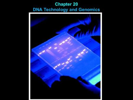 Chapter 20 DNA Technology and Genomics. DNA cloning DNA probe hybridization Polymerase Chain Reaction (PCR) Gel Electrophoresis Southern Blot DNA sequencing.