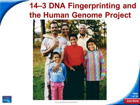 End Show Slide 1 of 24 Copyright Pearson Prentice Hall 14–3 DNA Fingerprinting and the Human Genome Project.