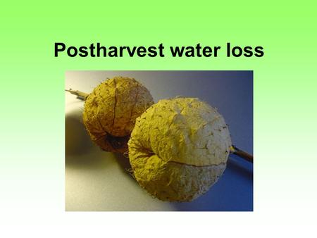 Postharvest water loss. Water loss 90 to 95% of the commodity is water. milk has more solids than cucumber (weight basis). water loss resulting in direct.