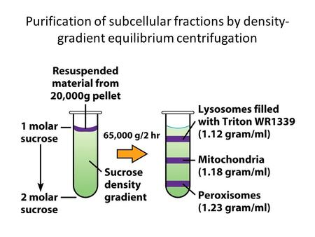 18.7 Isolation, Purification, and Fractionation of Proteins (1)