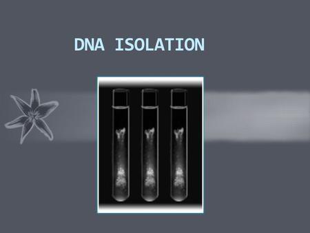 DNA ISOLATION. INTRODUCTION  DNA isolation is an extraction process of DNA from various sources. The scientist must be able to separate the DNA from.