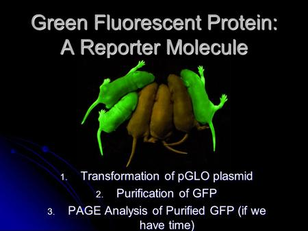 Green Fluorescent Protein: A Reporter Molecule 1. Transformation of pGLO plasmid 2. Purification of GFP 3. PAGE Analysis of Purified GFP (if we have time)