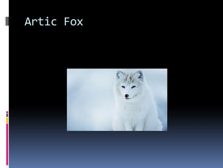 Artic Fox. Covering  It is furry and white  It changes colors in the seasons  It is grayish brown in the summer  It is white in the winter  The fur.