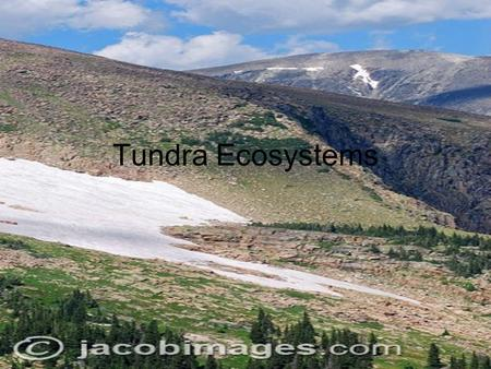Tundra Ecosystems. Where Its Located The tundra is located in many parts of the north part of the world. It goes from Greenland to parts of Alaska, Canada,