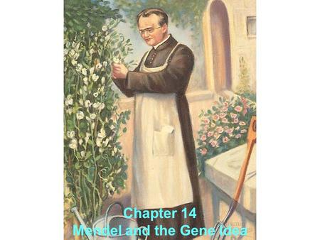Chapter 14 Mendel and the Gene Idea. A. Gregor Mendel's Discoveries Mendel brought an scientific and mathematical approach to studying heredity  this.