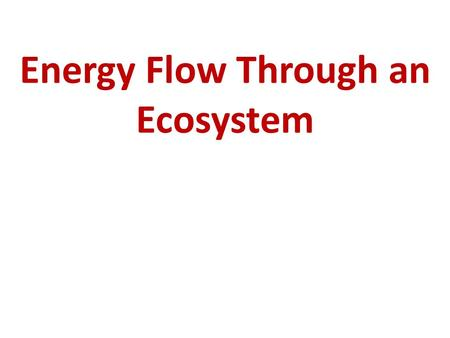 Energy Flow Through an Ecosystem copyright cmassengale1.