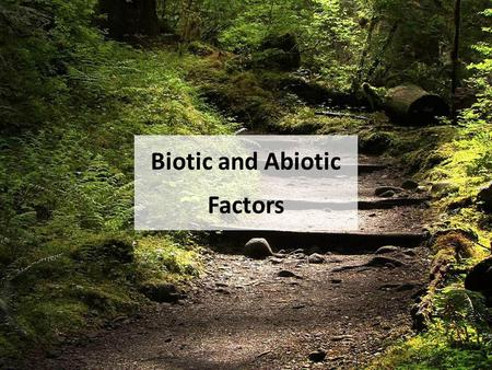 Biotic and Abiotic Factors. Lesson Essential Question: What abiotic factors help organisms live & thrive? Recall that the foundation of environmental.