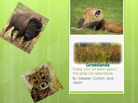 Today you will learn about the grass covered lands. By: Sabeen,Colton, and Jason.