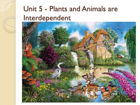 Unit 5 - Plants and Animals are Interdependent. Living Things and the Environment Organism – a living thing All organisms need the following things to.