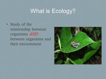 relationship between organisms and the environment