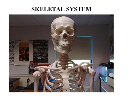 SKELETAL SYSTEM. Functions of the Skeletal System A. Bones are made of OSSEOUS TISSUE FUNCTIONS: 1.Support 2. Protection 3.Body movement 4. Blood cell.