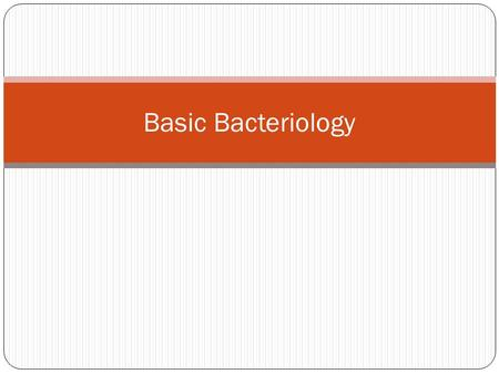 Basic Bacteriology. Bacteria Bacteria are single-celled organisms Contain no membrane bound nucleus Termed prokaryotes = pre nucleus Pro = pre karyote.