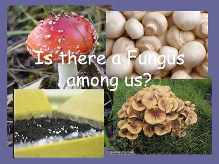 Is there a Fungus among us?