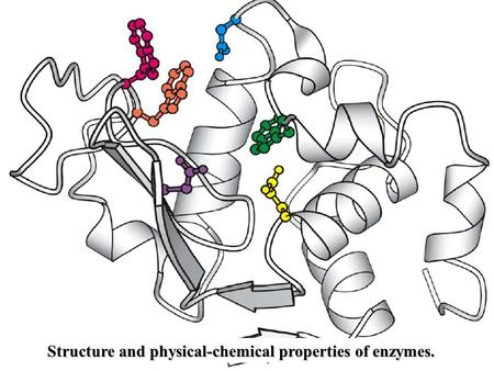 Structure and physical-chemical properties of enzymes.