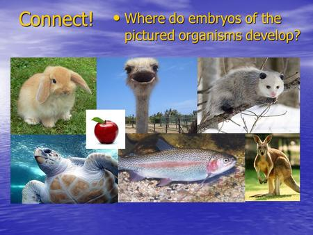 Connect! Where do embryos of the pictured organisms develop? Where do embryos of the pictured organisms develop?