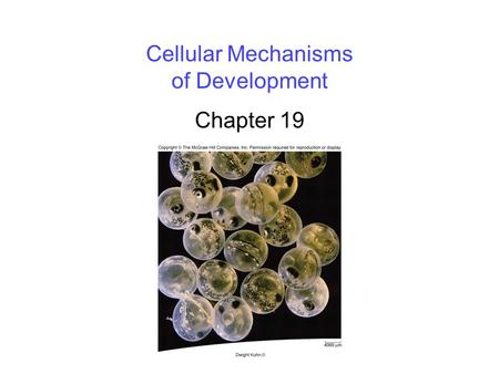 Cellular Mechanisms of Development Chapter 19. 2 Overview of Development Development is the successive process of systematic gene- directed changes throughout.