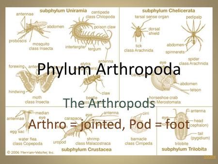 The Arthropods Arthro = jointed, Pod = foot