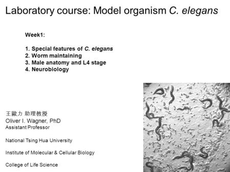 王歐力 助理教授 Oliver I. Wagner, PhD Assistant Professor National Tsing Hua University Institute of Molecular & Cellular Biology College of Life Science Laboratory.