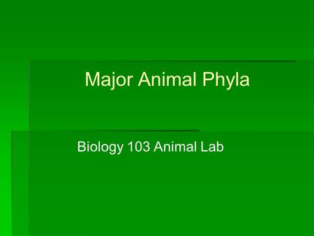 Major Animal Phyla Biology 103 Animal Lab. Phylum Porifera Sponges Asymmetrical or Radial symmetry No organs Most are Marine Sessile filter-feeders Asexual.