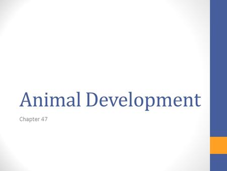 Animal Development Chapter 47. WHAT'S NEXT? Once copulation ends…