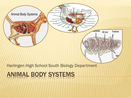 Harlingen High School South Biology Department