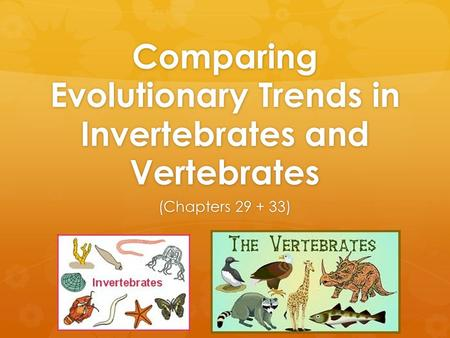 Comparing Evolutionary Trends in Invertebrates and Vertebrates (Chapters 29 + 33)