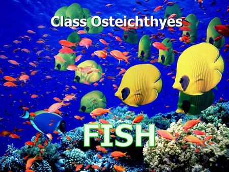 Class Osteichthyes. COLORATION Iridophores and chromatophores: pigment cells Iridophores and chromatophores: pigment cells Helps in species recognition.