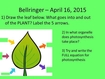 Bellringer – April 16, 2015 1) Draw the leaf below. What goes into and out of the PLANT? Label the 5 arrows. 2) In what organelle does photosynthesis.