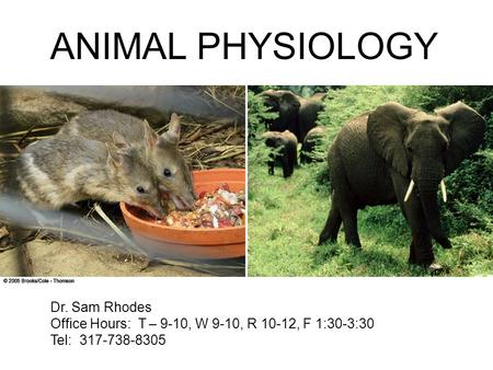 ANIMAL PHYSIOLOGY Dr. Sam Rhodes Office Hours: T – 9-10, W 9-10, R 10-12, F 1:30-3:30 Tel: 317-738-8305.